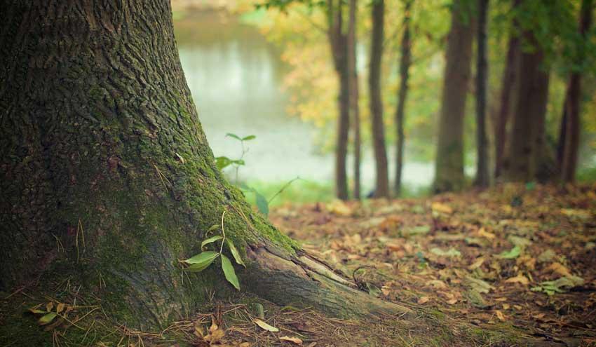 Mejora en los filtros verdes mediante la adición de enmiendas sostenibles al suelo