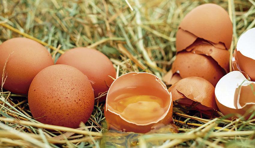 Un proyecto europeo estudiará la viabilidad de utilizar la cáscara del huevo para fabricar azulejos