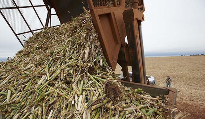 El bagazo de la caña de azúcar nanomodificado puede 'limpiar' el agua contaminada con cobre o cromo