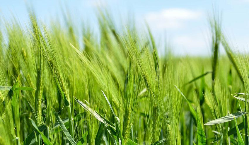 Apostar por modelos agrícolas y ganaderos más sostenibles: la urgencia de una transición para España