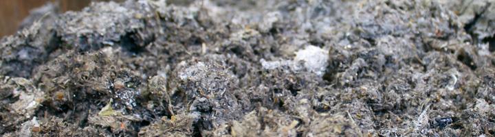 Investigadores de la UPM y la UMH consiguen incrementar un 40% la producción de biomasa en cultivos energéticos con lodos de EDAR