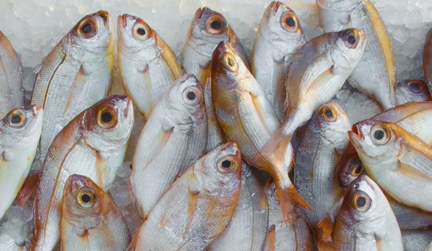 Incatema, adjudicataria de un proyecto de pesca en Turquía con financiación de la Unión Europea