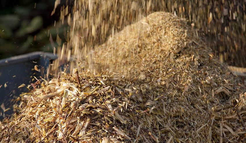 Veolia Biomasa actúa en Cuenca y Alicante para prevenir futuros incendios y recuperar los bosques