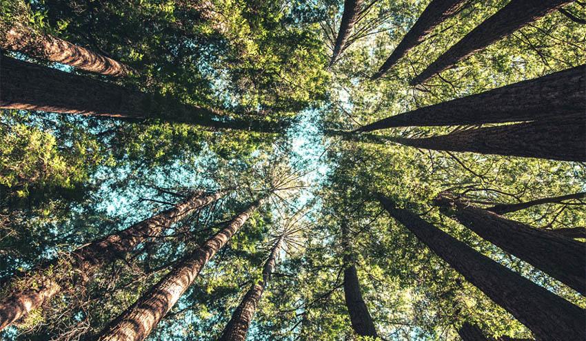 Veolia Biomasa España aumenta un 3% la producción de biomasa procedente de astilla forestal