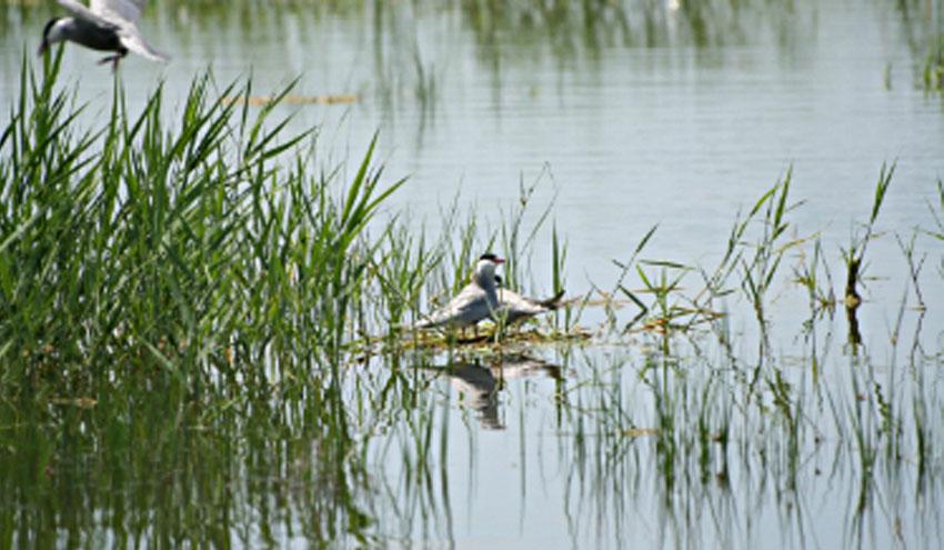 SUEZ Water Spain se une a la Iniciativa Española Empresa y Biodiversidad