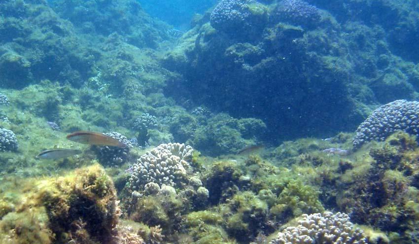 El CSIC confirma la vulnerabilidad del mar Mediterráneo a la acidificación