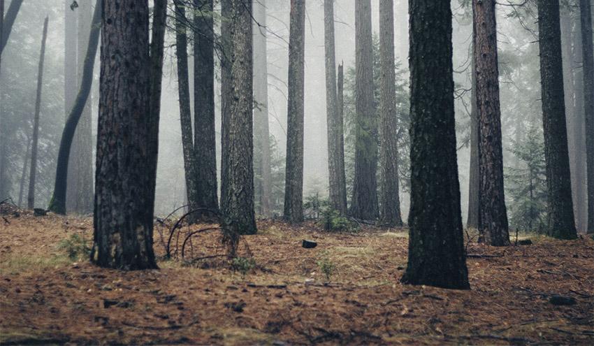 Soria reducirá la vulnerabilidad de los bosques frente al cambio climático a través de LIFE Soria ForestAdapt