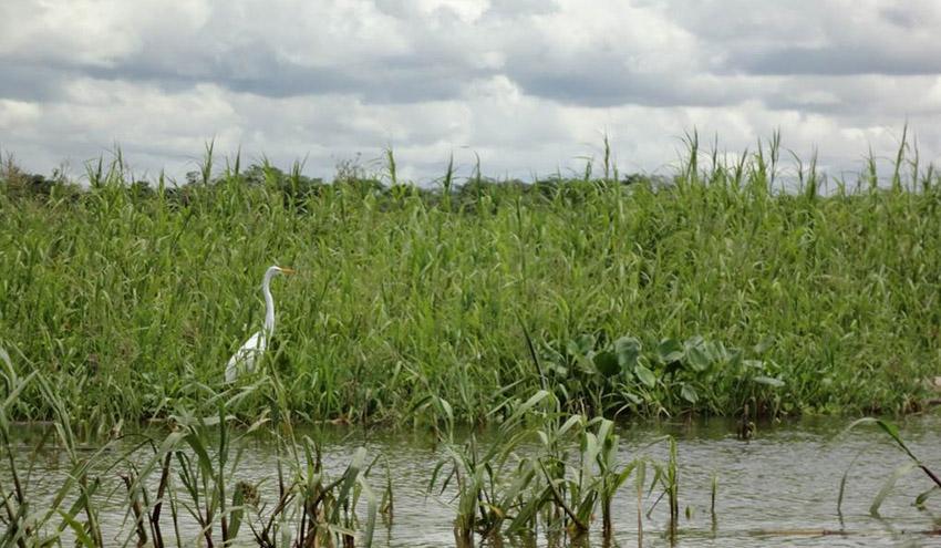 El ICM-CSIC participa en el desarrollo del catálogo de genes microbianos más completo del río Amazonas