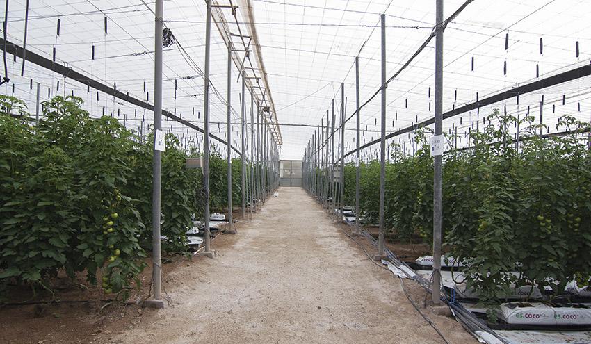 Sacyr Agua emplea agua desalada para mejorar la producción de los cultivos