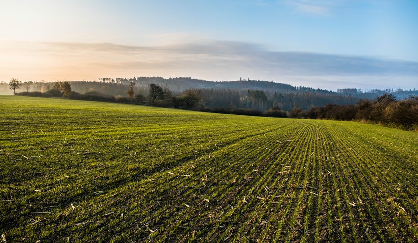 Un estudio evalúa la cantidad de residuos de plaguicidas en suelos de cultivo