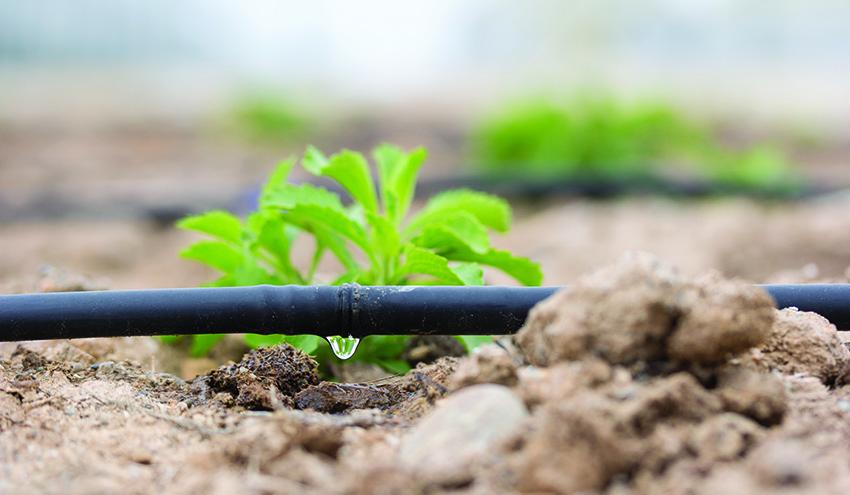 Un futuro sostenible aumentando la eficiencia de los recursos hídricos en la agricultura