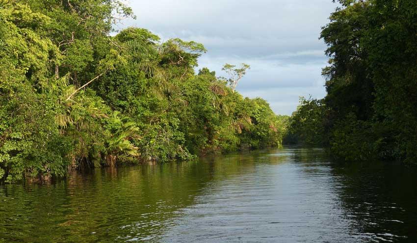 Los nitratos del abono llegan en grandes cantidades al mayor humedal de Costa Rica