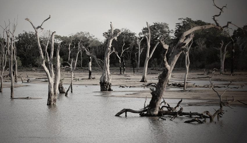 El nuevo Plan Nacional de Adaptación al Cambio Climático: novedades y posteriores desarrollos normativos