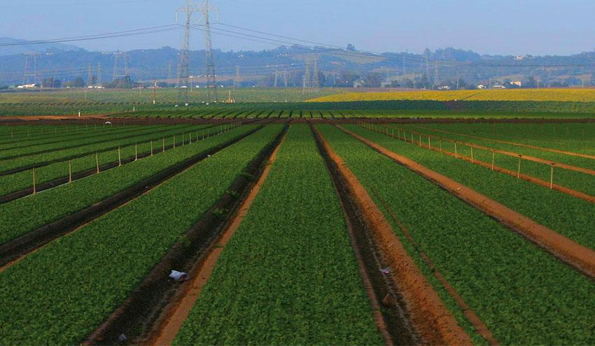 ¿Cuanto cuesta reducir las emisiones de gases de efecto invernadero en la agricultura?