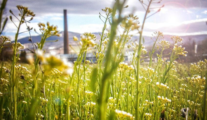 Llamamiento para una recuperación económica verde