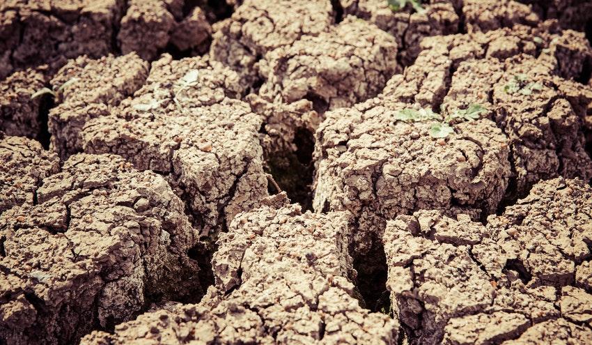 Diez buenas noticias sobre desertización