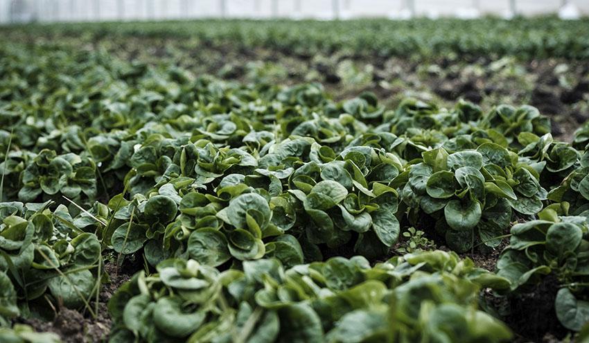 Veolia ampliará la capacidad de cristalización del mayor productor de fertilizantes de potasa en Jordania