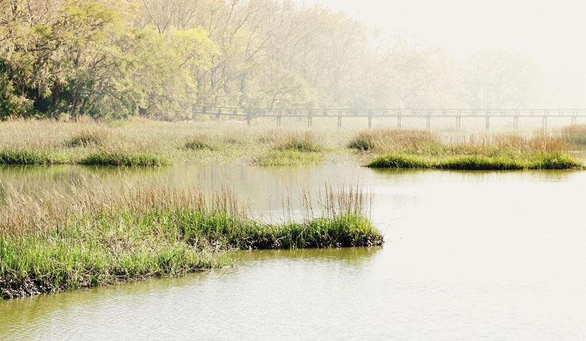¿Están las soluciones a la crisis climática en la naturaleza?