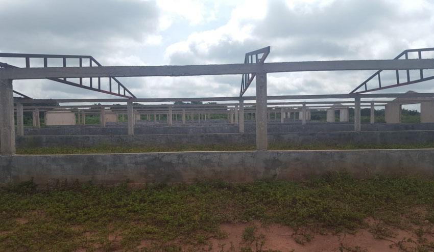 Incatema apoya a agricultores y pymes angolanas en la mejora de sus actividades productivas