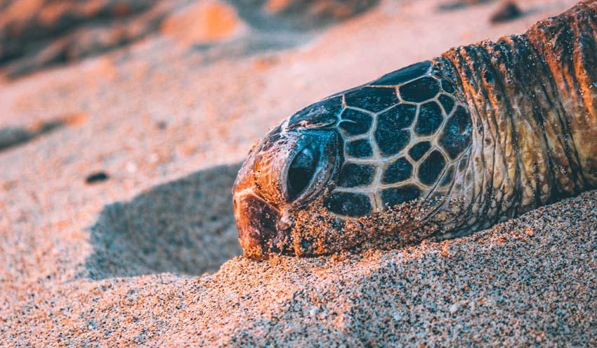 En España están amenazadas 1.019 especies animales, de las que 28 son marinas
