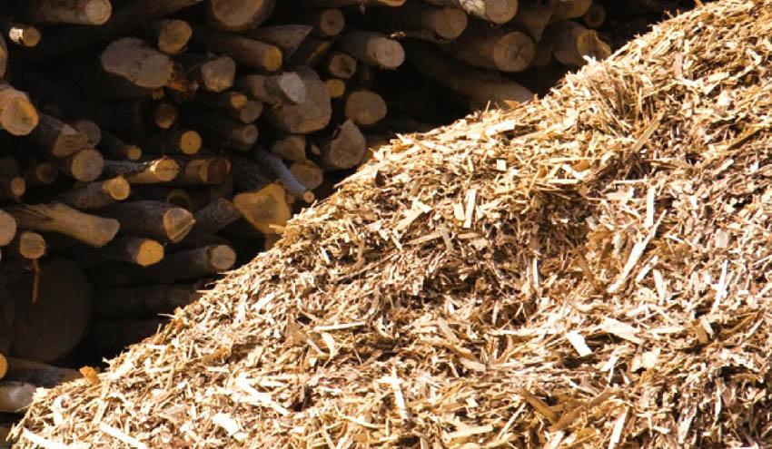 Avanzan los trámites de la nueva planta de biomasa de Forestalia en Cubillos del Sil