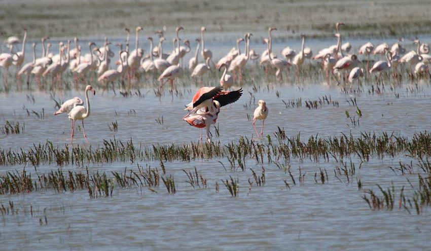 WWF denuncia la falta de medidas contra el regadío y los pozos ilegales en Doñana
