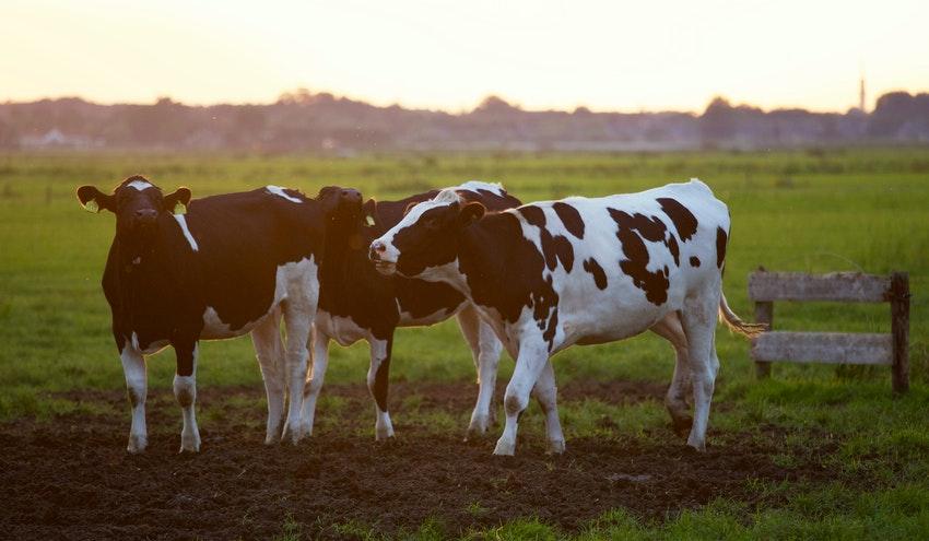 Las emisiones de metano están acelerando el cambio climático. ¿Cómo podemos reducirlas?