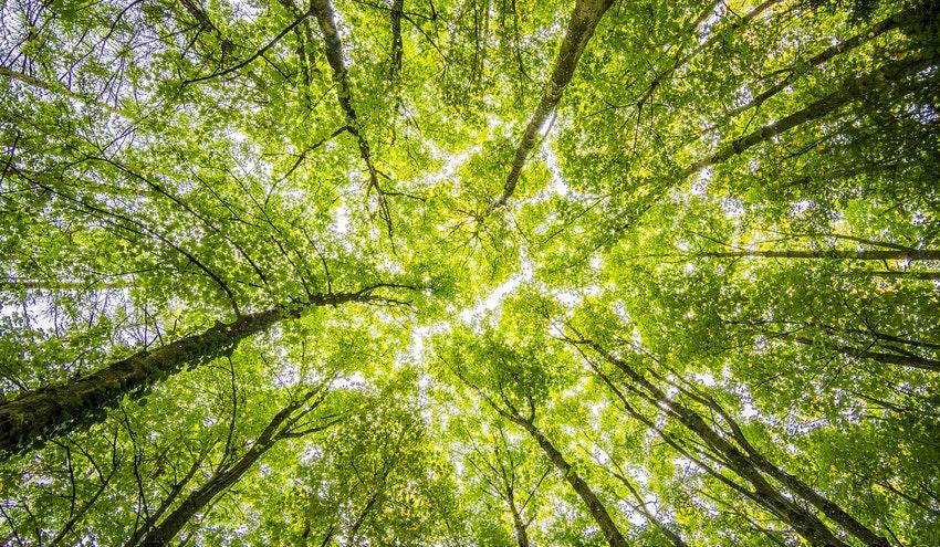 El Pacto Europeo por el Clima impulsará la acción ciudadana para la transición ecológica del continente