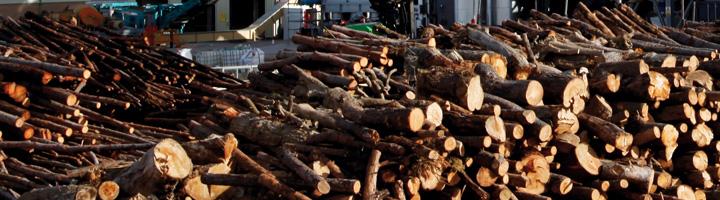 Abengoa desarrollará en Bélgica la planta de generación eléctrica con biomasa más grande del mundo por 315 millones de euros