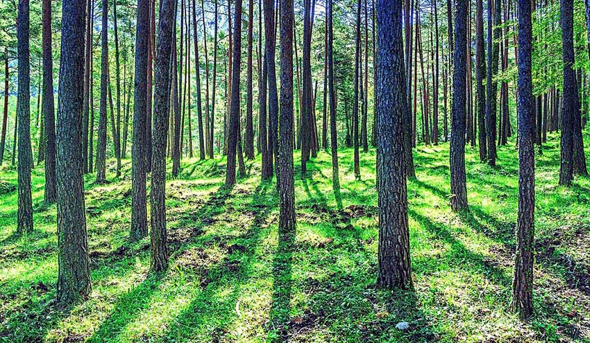 La capacidad de la biodiversidad forestal para mitigar el CO2 podría perderse en condiciones climáticas más adversas