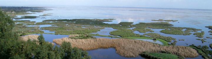 Las marismas del Parque Nacional de Doñana actúan como sumideros de carbono según un estudio liderado por el CSIC