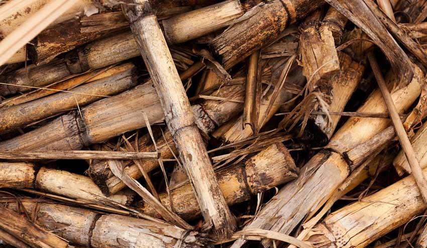 La Xunta señala que el uso energético de la biomasa residual mejora la competitividad empresarial