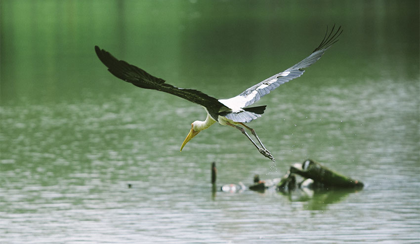 El Día Mundial de los Humedales 2020 pone el foco en la pérdida de biodiversidad