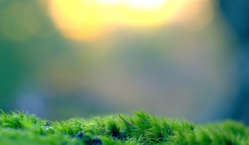 Mecanismos de atenuación y parámetros clave para mejorar el rendimiento del tratamiento en filtros verdes