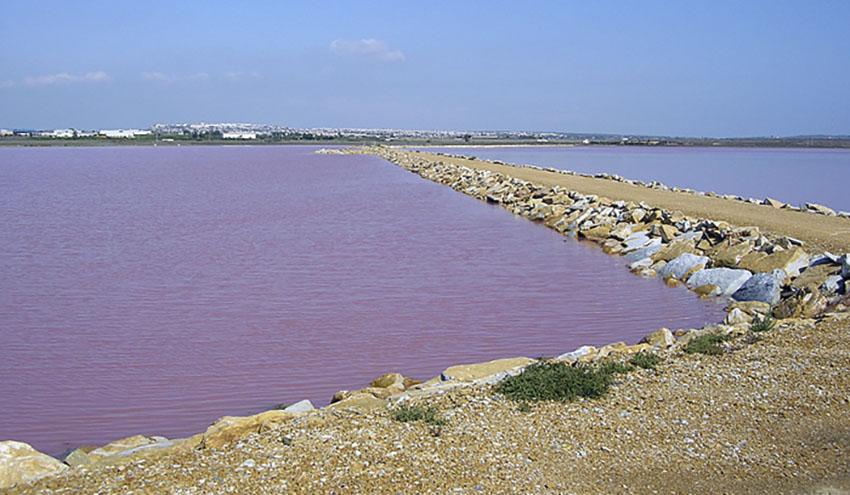 """La entrada de aguas de diferente salinidad, principal presión antrópica de las lagunas de """"La Mata-Torrevieja"""""""