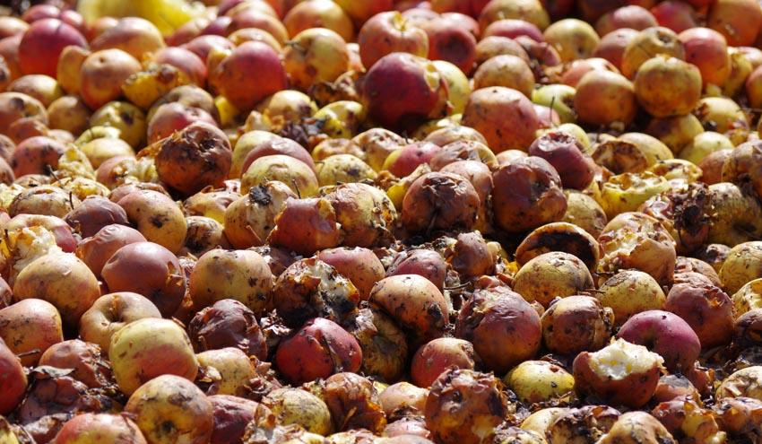 Desarrollan un proyecto piloto en España para reducir el desperdicio alimentario en Europa