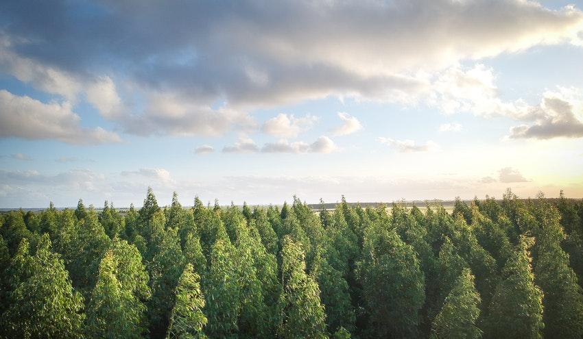 La gestión de los bosques, clave en la lucha contra el cambio climático