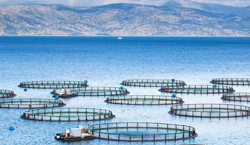 Paquete de herramientas basadas en la web para la sostenibilidad del sector de la acuicultura