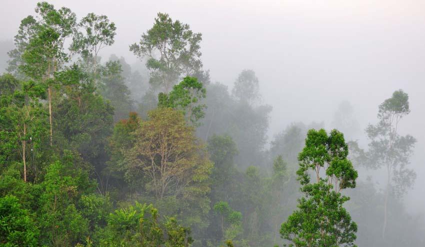 Desvelan la importancia de la diversidad vegetal en el funcionamiento de los ecosistemas fluviales a escala global
