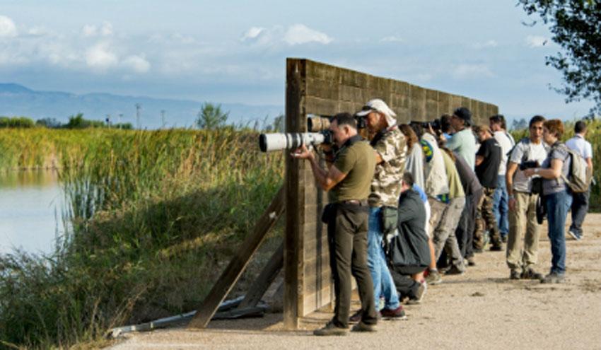 El programa ambiental de voluntariado BiObserva estará presente en el Delta Birding Festival