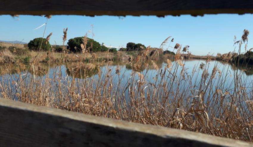 Una investigación del ICTA-UAB respalda las preocupaciones ciudadanas sobre el futuro del Delta del Llobregat