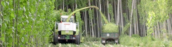 Investigadores consiguen aumentar la producción de biomasa a través de la biotecnología