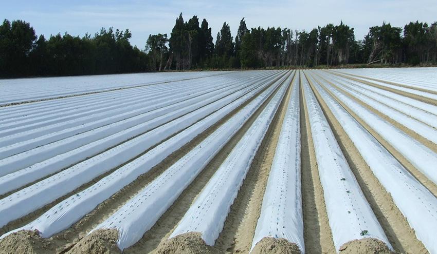 Nuevo paso adelante de MAPLA, el nuevo Sistema de gestión de residuos plásticos agrarios de ANAIP y Cicloplast