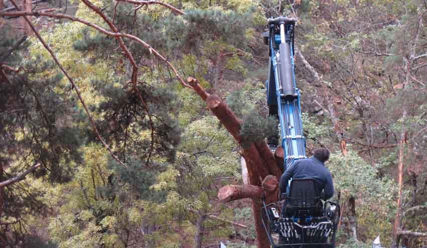 AVEBIOM se une al Foro de Bosques y Cambio Climático