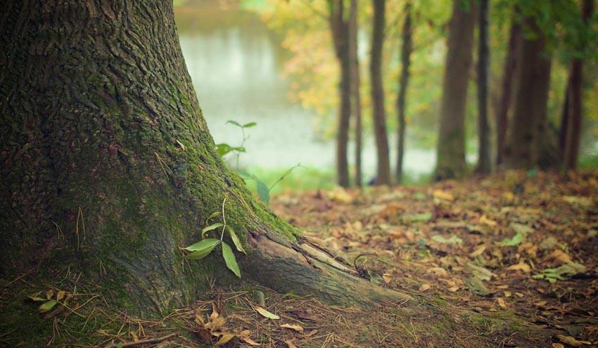 El papel de los bosques como sumideros de carbono