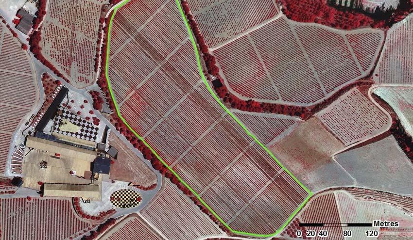 Buscando estrategias para mitigar los efectos del cambio climático en viticultura ecológica