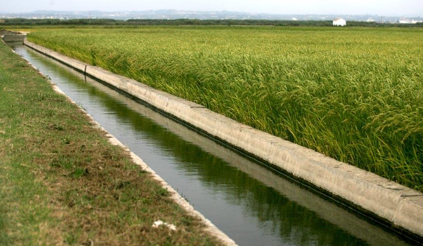 Los regantes denuncian haber recibido apenas un 19% de la inversión prevista en los planes hidrológicos