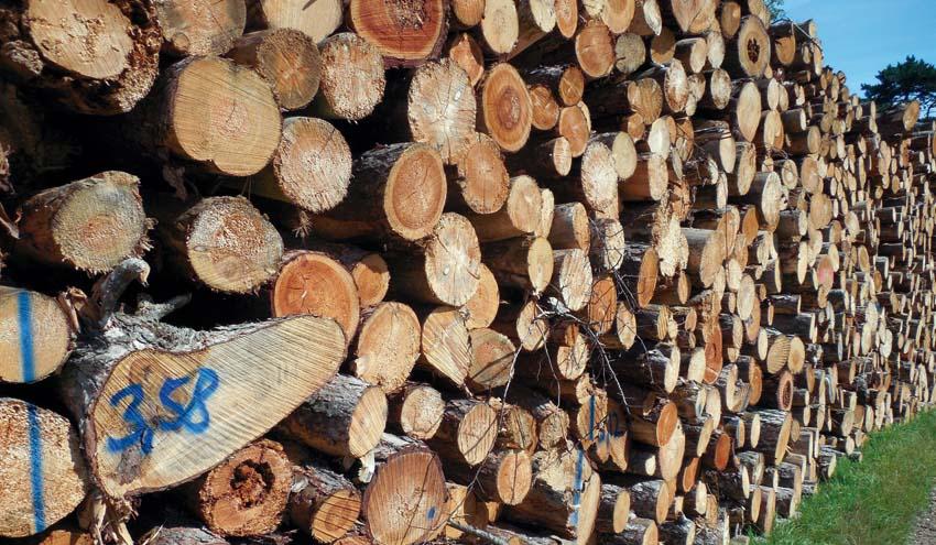 Confirmada la autorización ambiental de la planta de biomasa de Monzón