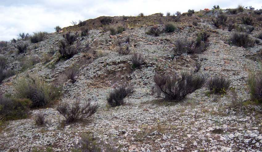 Las costras biológicas del suelo mejoran el equilibrio del agua en los ecosistemas semiáridos