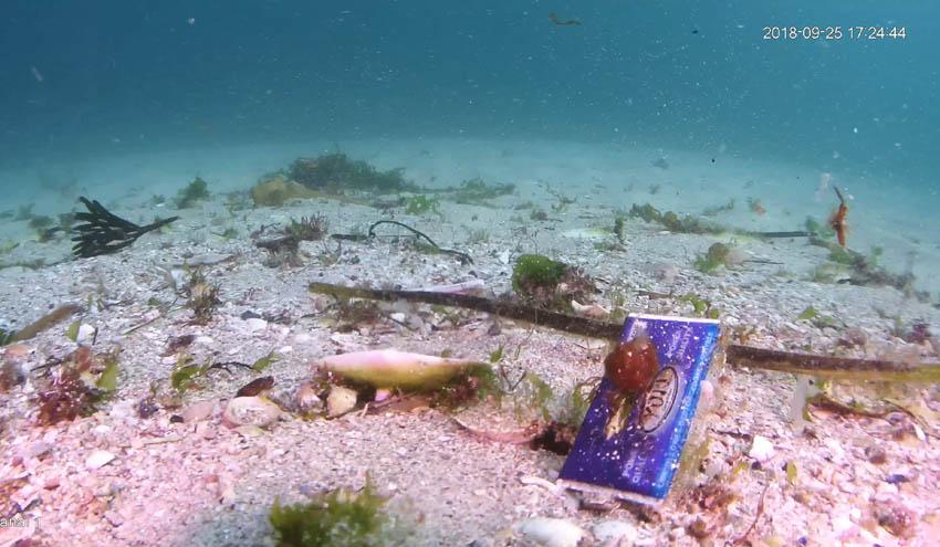 Nueva investigación sobre basuras marinas en los fondos marinos del Parque Nacional Islas Atlánticas